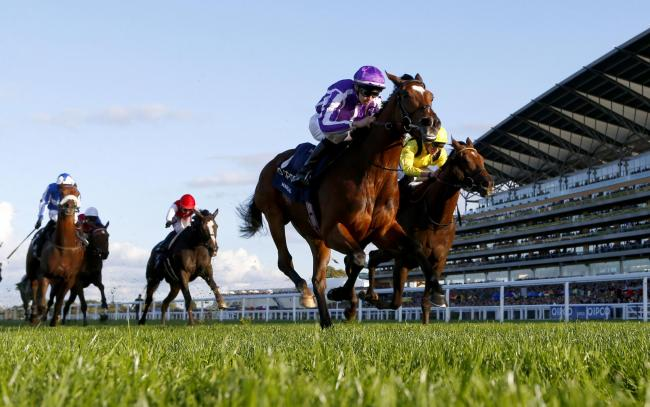 Magical and Donnacha O'Brien winning The Qipco Champion StakesAscot 19.10.19Pic Dan Abraham-focusonracing.com