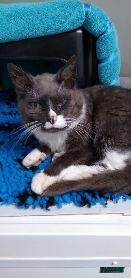 Medivet in Wokingham are desperately trying to find the owners of this cat