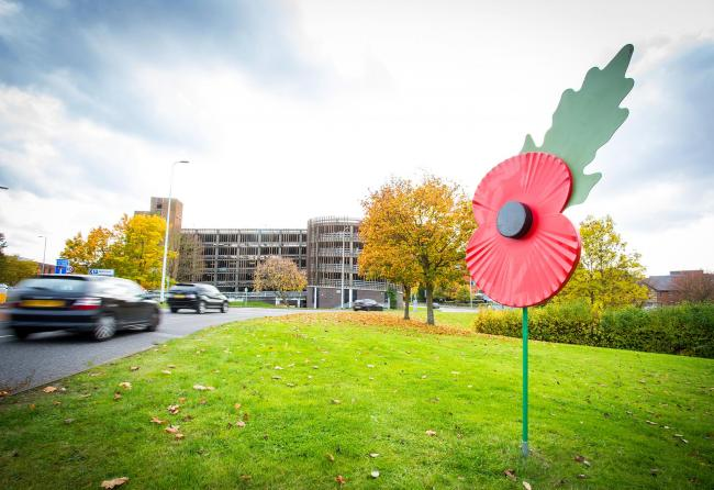 A poppy on the 3M roundabout